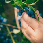 It Fallaet Zorgboerderij - Fruittuin